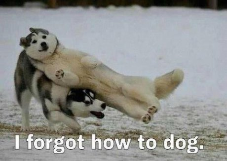 Dog Fail Meme