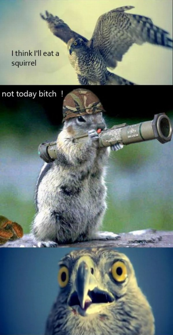 I Think I Ll Eat A Squirrel Win Picture Webfail Fail