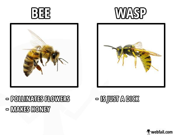 Bee vs Wasp - Fun Picture | Webfail - Fail Pictures and Fail Videos You Are Awesome Gif The Office
