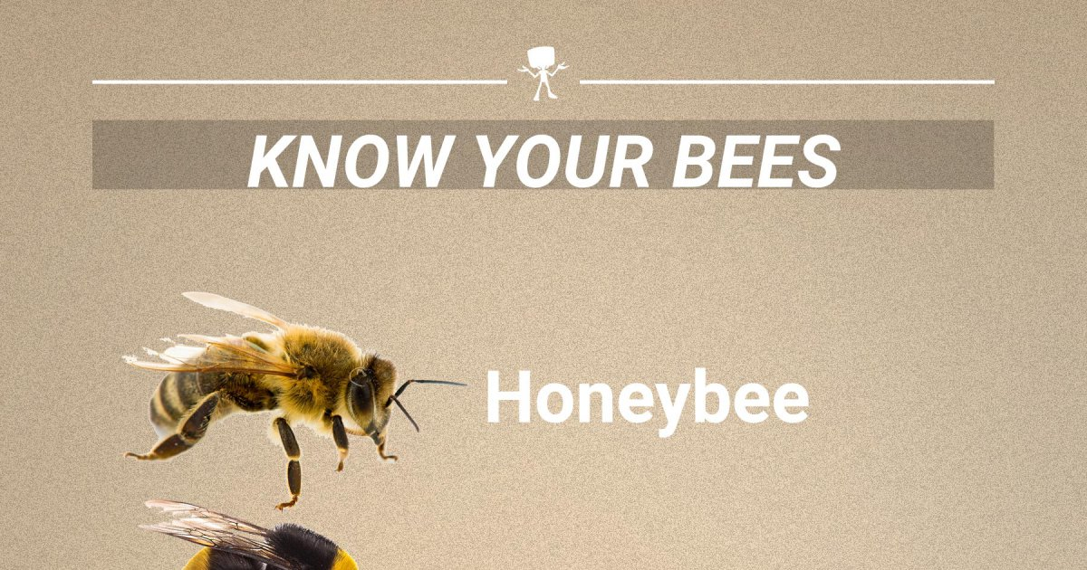 Know Your Bees Webfail Fail Pictures And Fail Videos