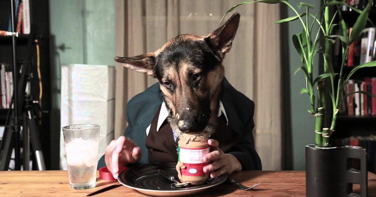 odin der hund isst wie ein mensch win video webfail fail bilder und fail videos. Black Bedroom Furniture Sets. Home Design Ideas