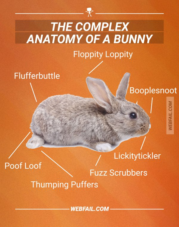 The complex anatomy of a bunny | Webfail - Fail Pictures and Fail Videos