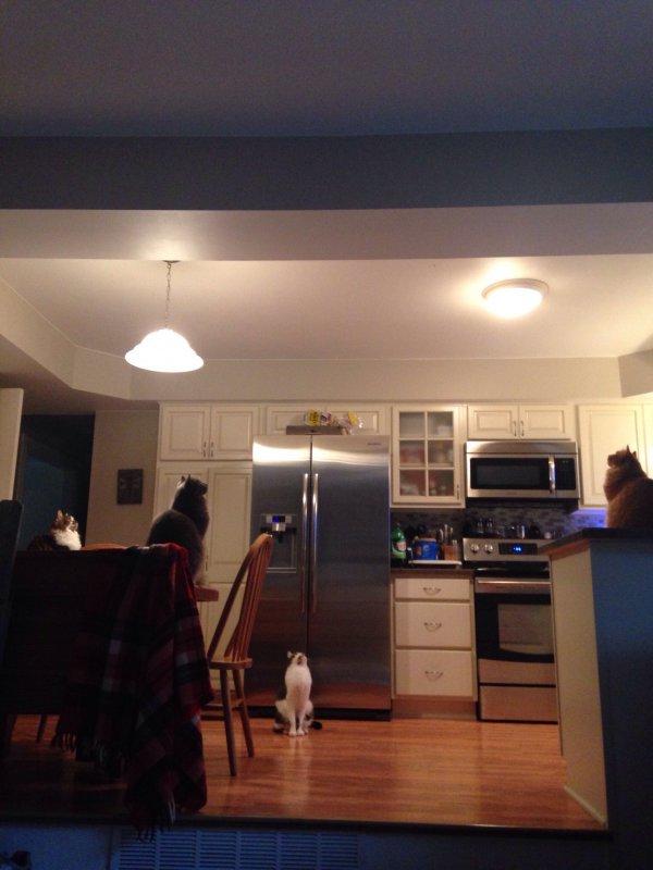 woran ich erkenne dass eine spinne an der decke ist. Black Bedroom Furniture Sets. Home Design Ideas
